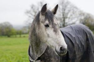 Rain rot on horses