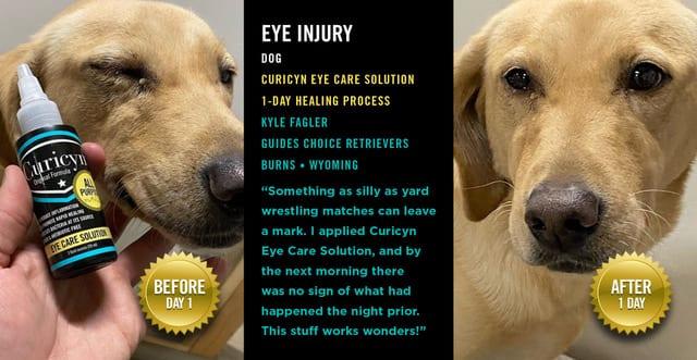 Curicyn Eye Solution starts to heal dog eye injury in 1-day